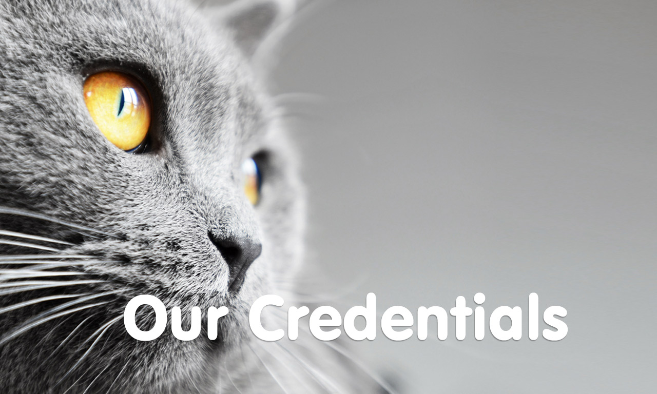 Love Cats Cheshire - Our Credentials
